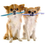 dogs with toothbrush